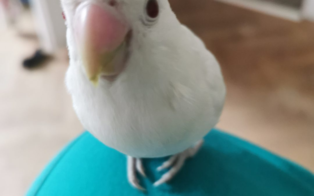 Papoušci přejí Veselé Velikonoce